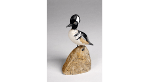 Hooded merganser duck from Yarmouth Town Libraries, West Yarmouth Library.