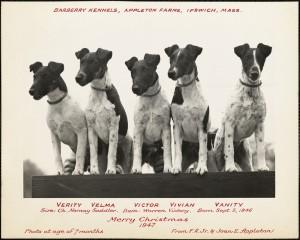 """Barberry Kennedy, Appleton Farms,"" 1947. From Appleton Family  Photo Album Collection"